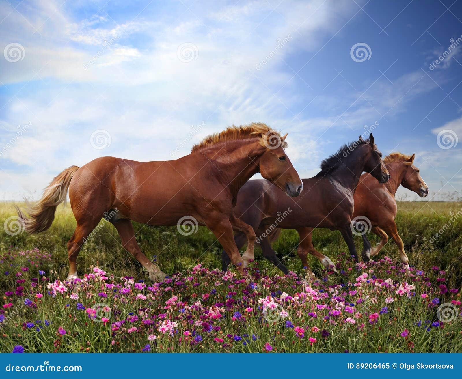 Die Pferde springend auf eine blühende Wiese