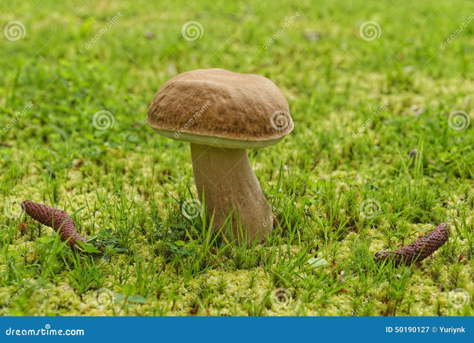 die pilze im sch nen botanischen garten von furnas stockfoto bild 50190127. Black Bedroom Furniture Sets. Home Design Ideas