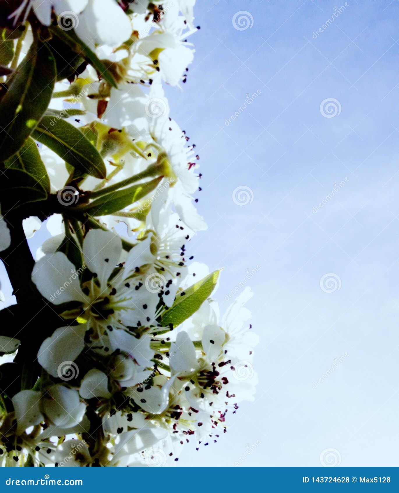 Die Pracht und das Aroma von blühenden Gärten