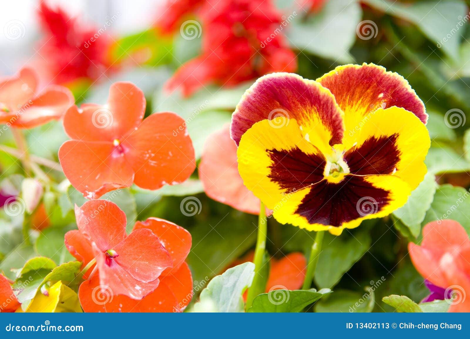 Die schöne Blume