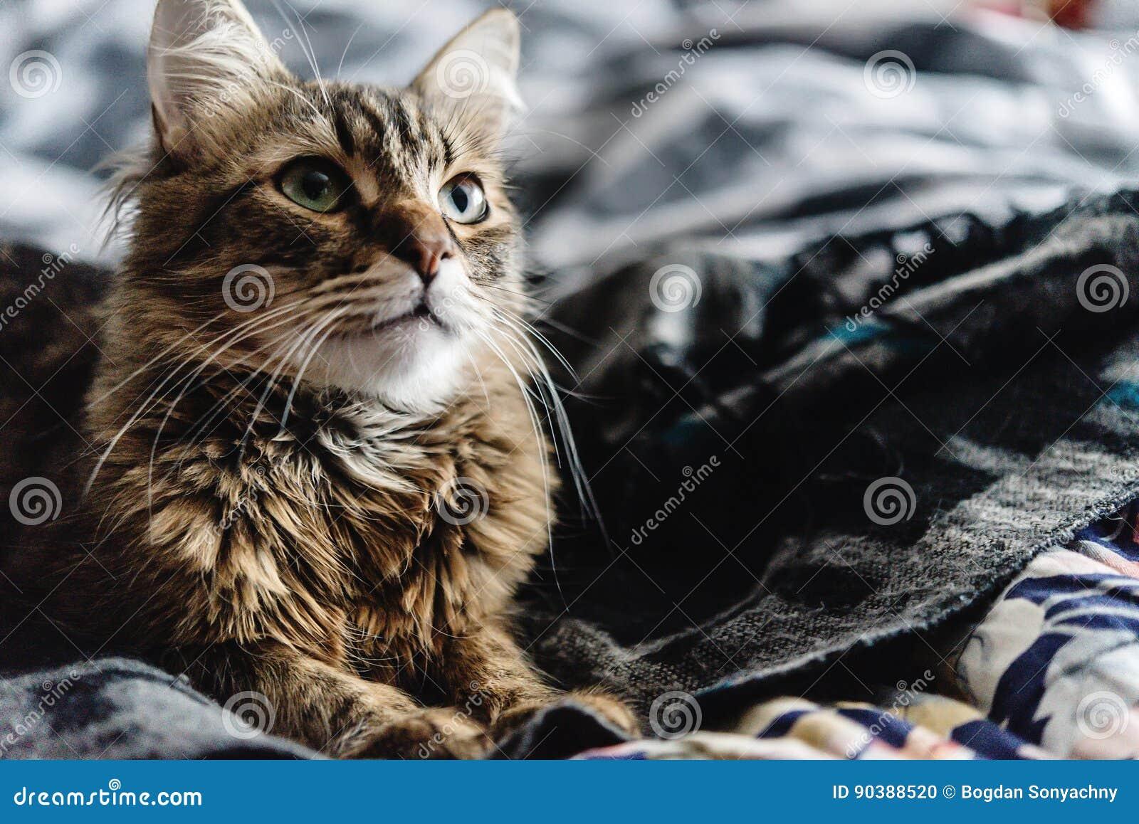 die schöne nette katze, die auf stilvollem bett mit interessantem