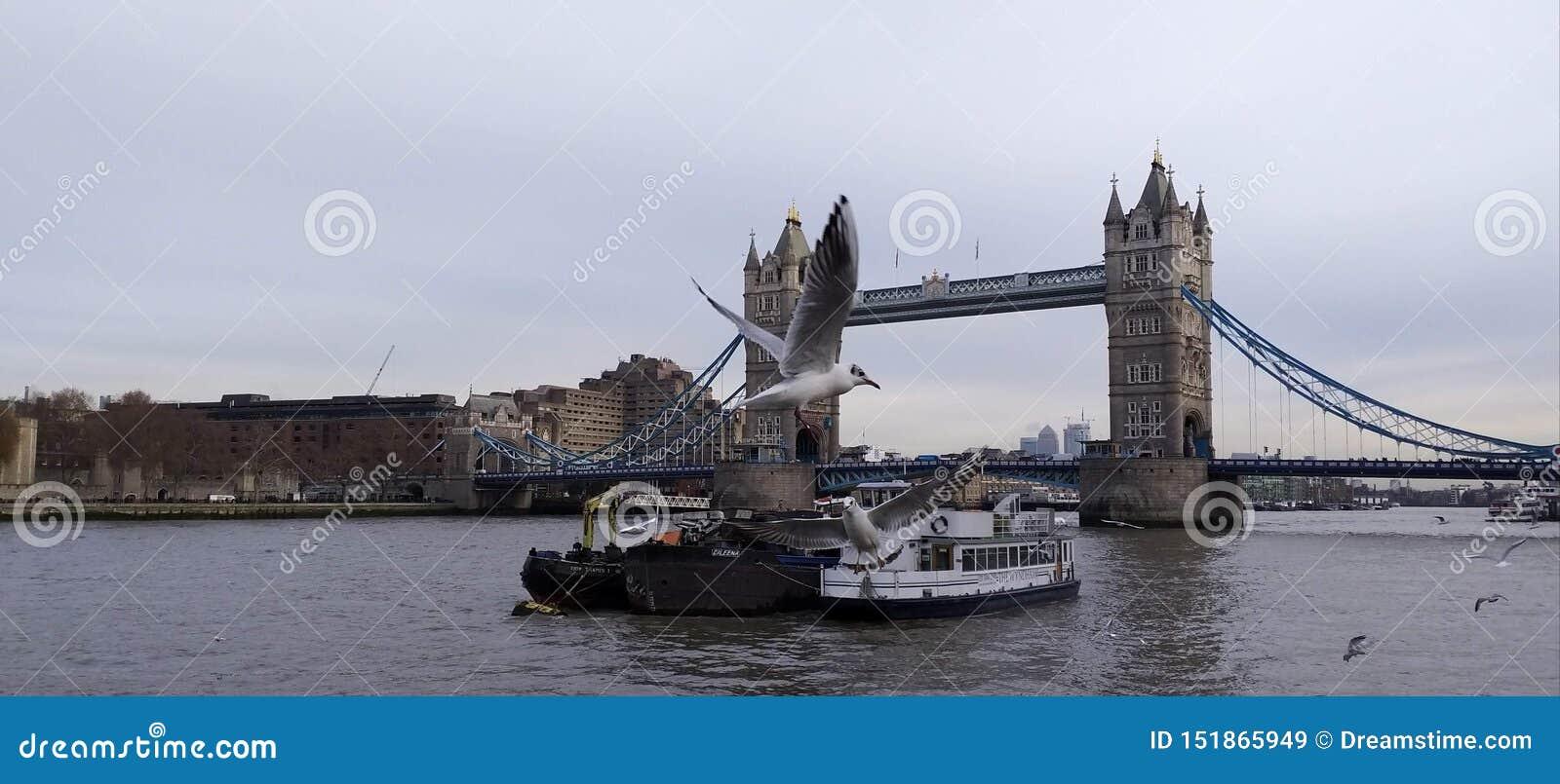 Die Seemöwen, die über die Turmbrücke fliegen
