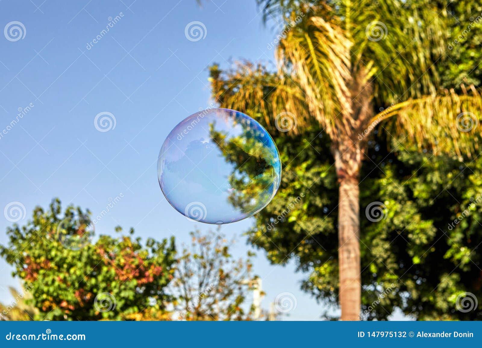 Die Seifenblase fliegt gegen die blauer Himmel- und Palmen