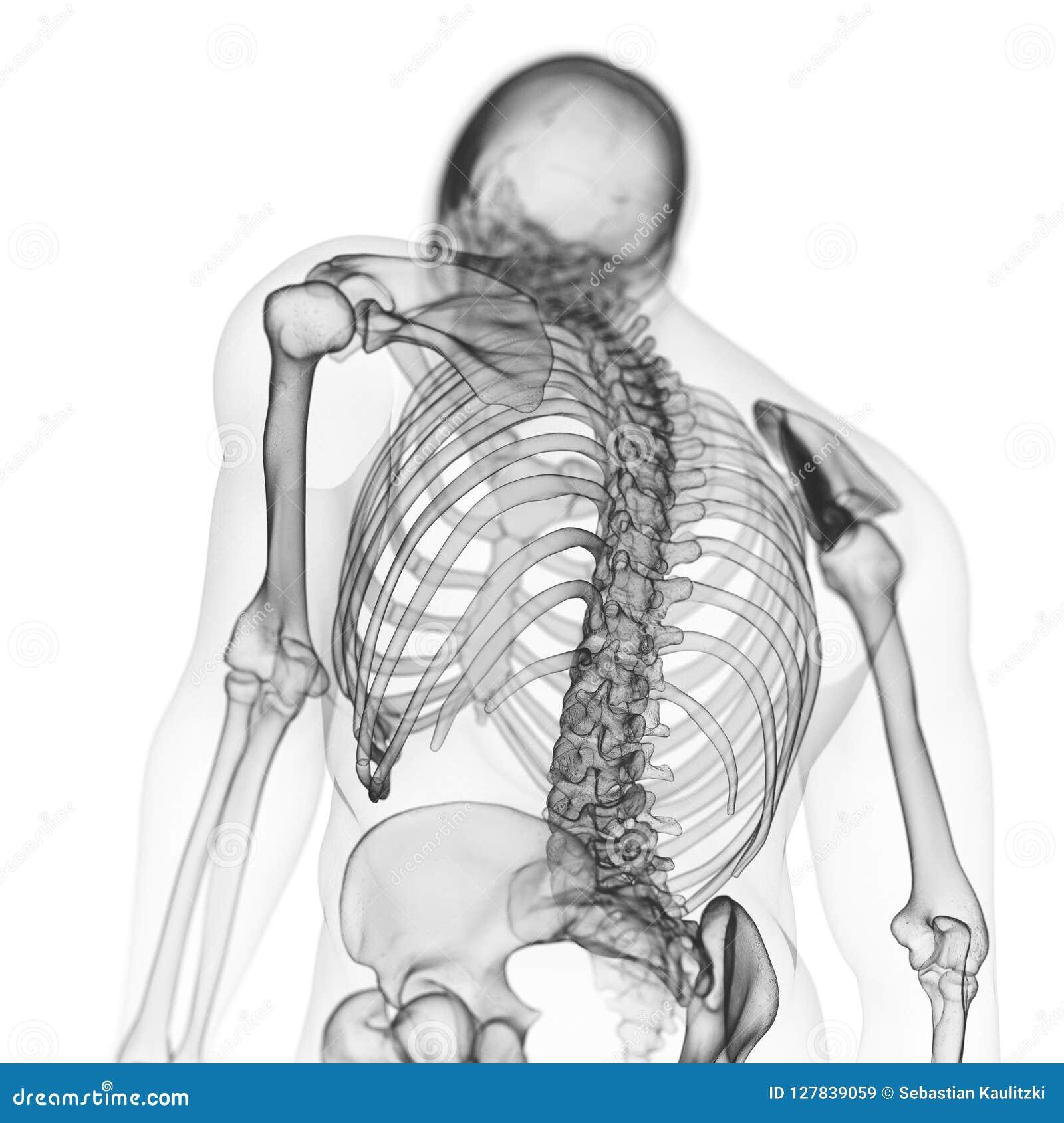 Die skelettartige Rückseite