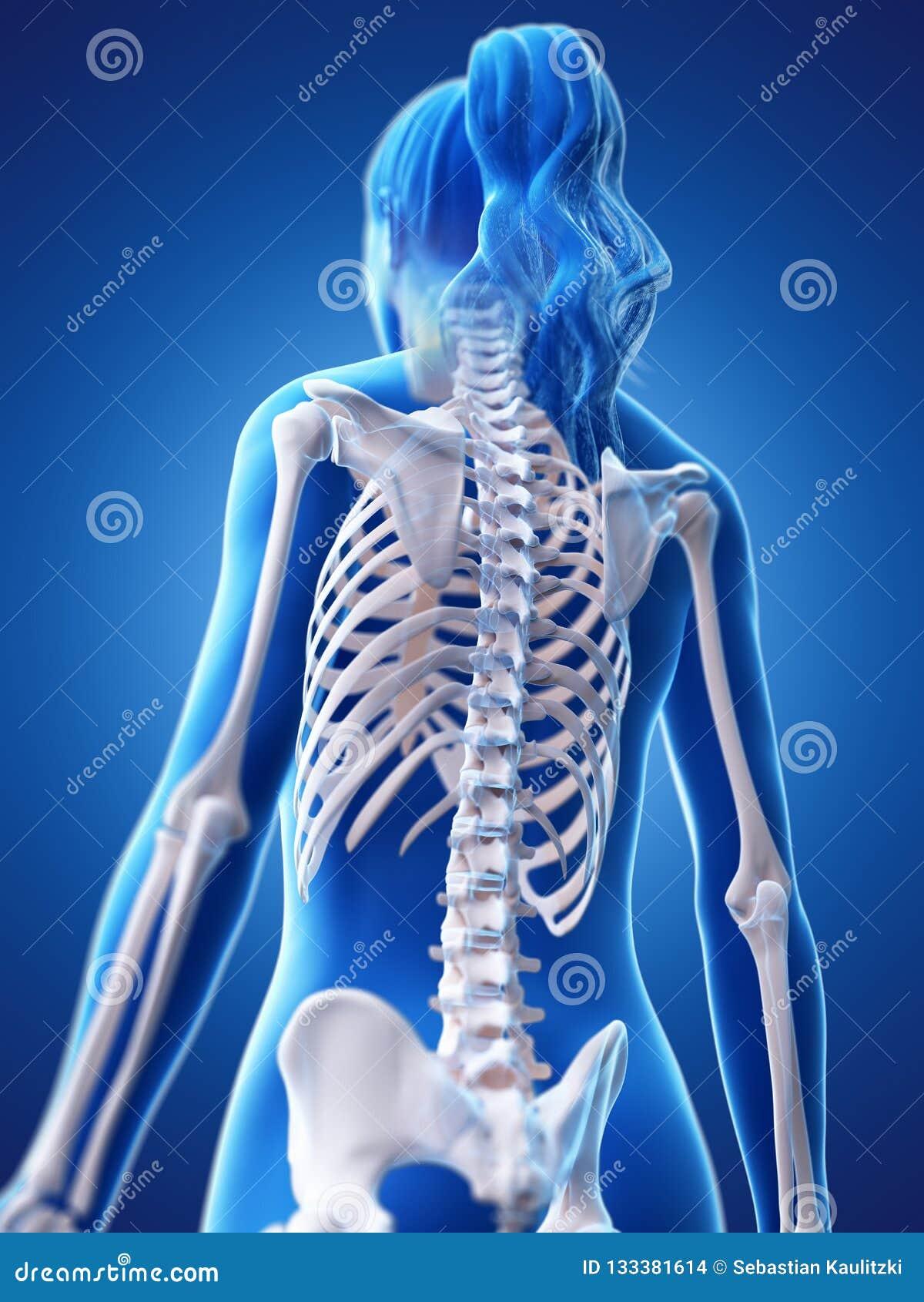 Die skelettartige Rückseite einer Frau