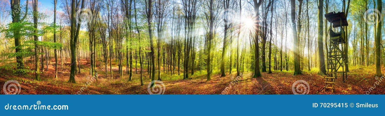Die Sonne, die in einem Wald am Frühjahr, breites Panorama scheint
