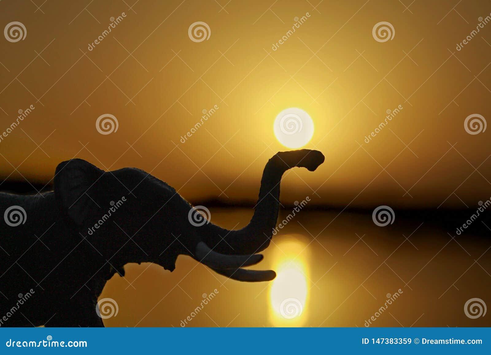 Die Sonne und der Elefant während des Sonnenuntergangs