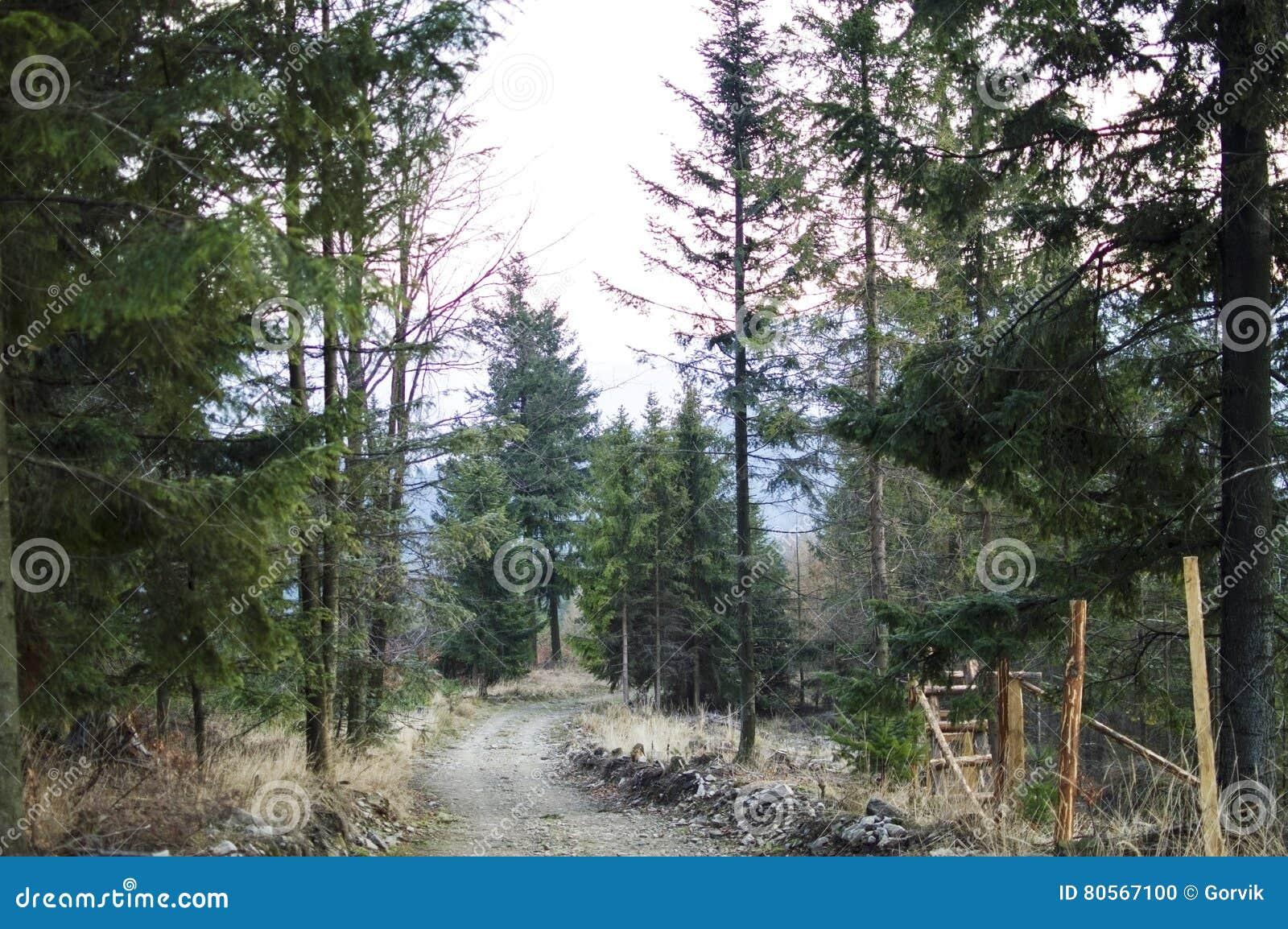 Die Straße in einem Kieferwald