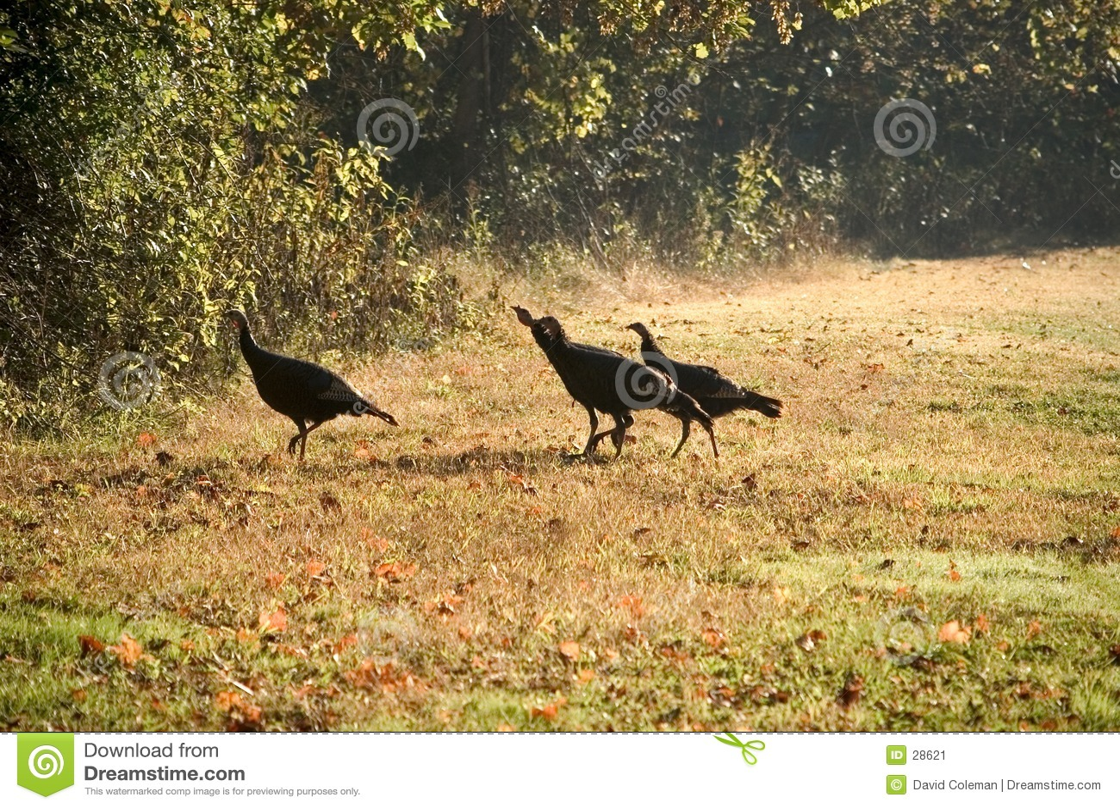Die Türkei-Trab
