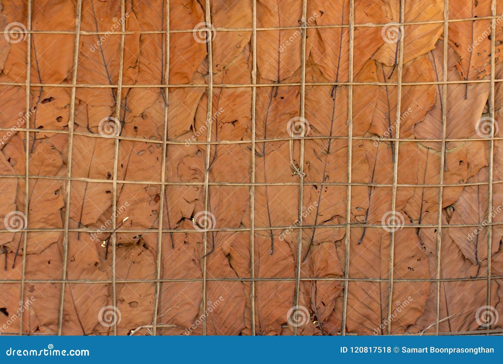 Die Wände werden von den getrockneten Blättern hergestellt, die als Hintergrund benutzt werden