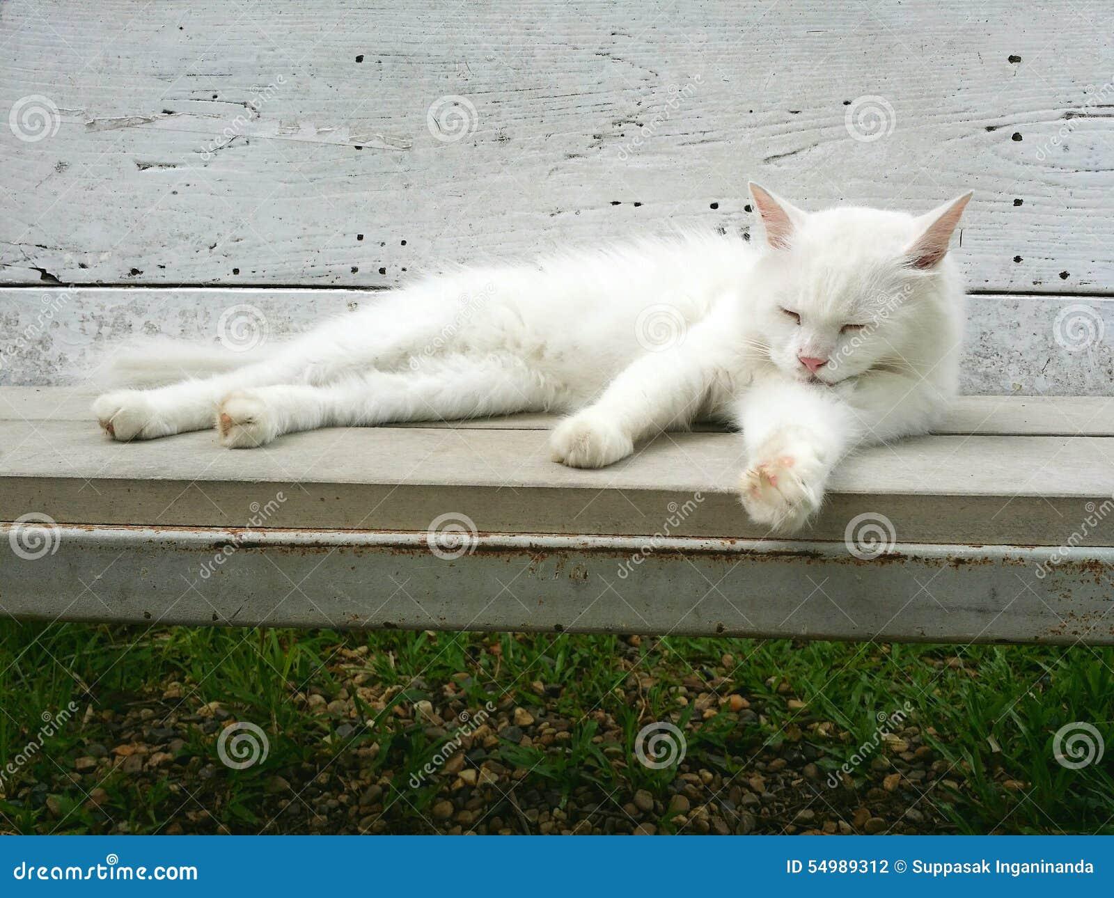 Die weiße Katze auf Bank