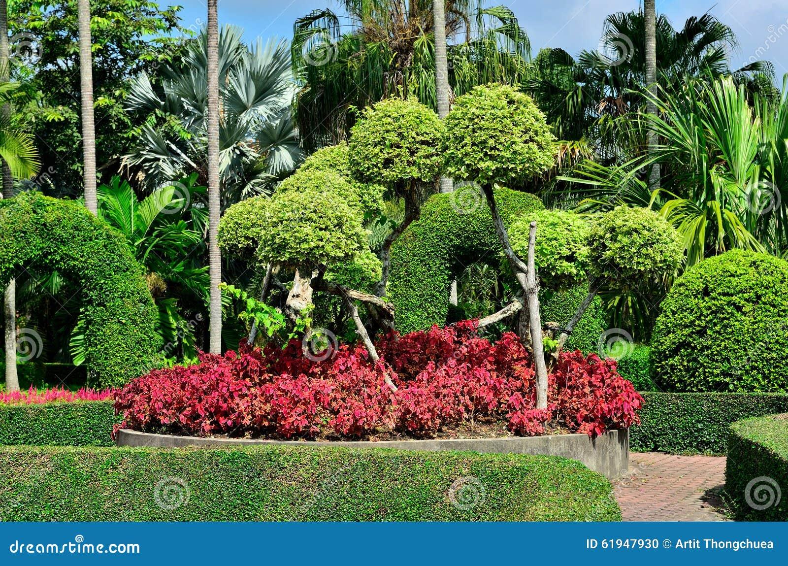 Die Zwergartigen Bäume Am Garten Stockfoto Bild Von Nave Grün