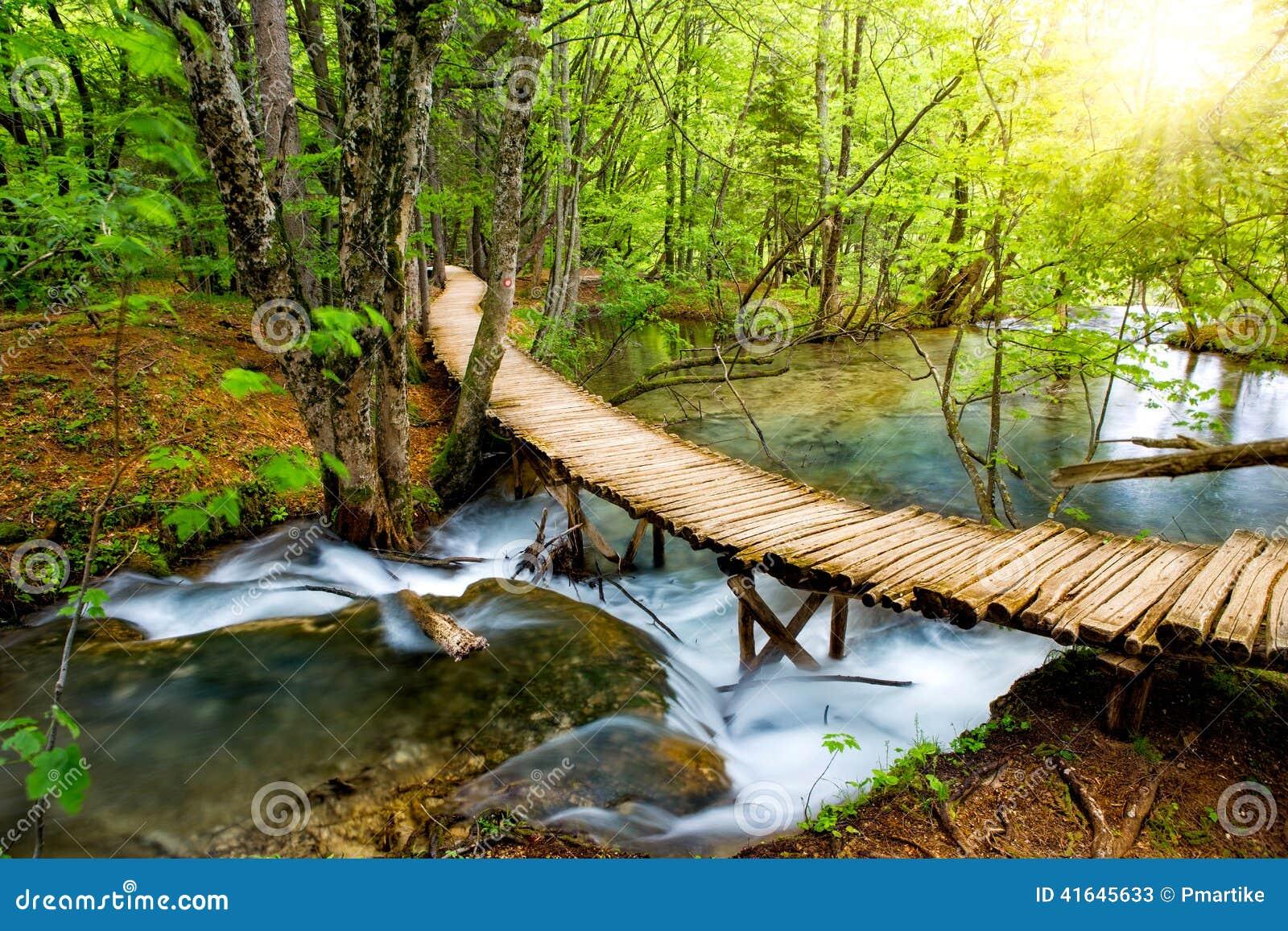 Diepe bosstroom met glashelder water in de zonneschijn De Meren van Plitvice, Kroatië