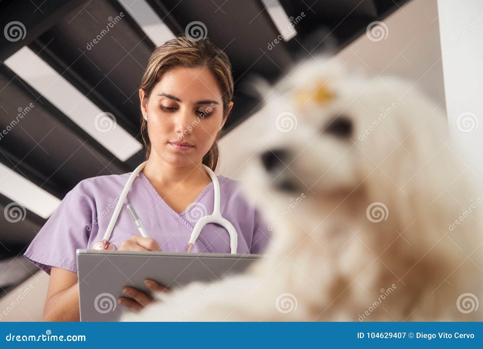 Download Dierenarts Die Tabletcomputer Met Behulp Van Tijdens Huisvraag Met Hond Stock Afbeelding - Afbeelding bestaande uit zorg, professioneel: 104629407