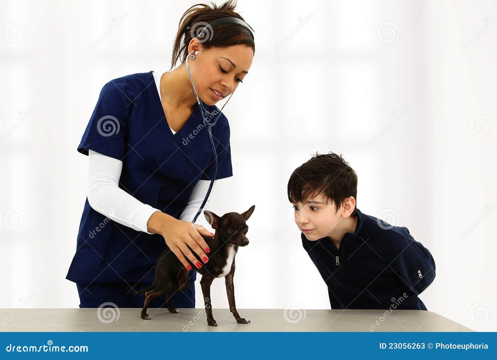 Dierenarts en Kind met Chihuahua