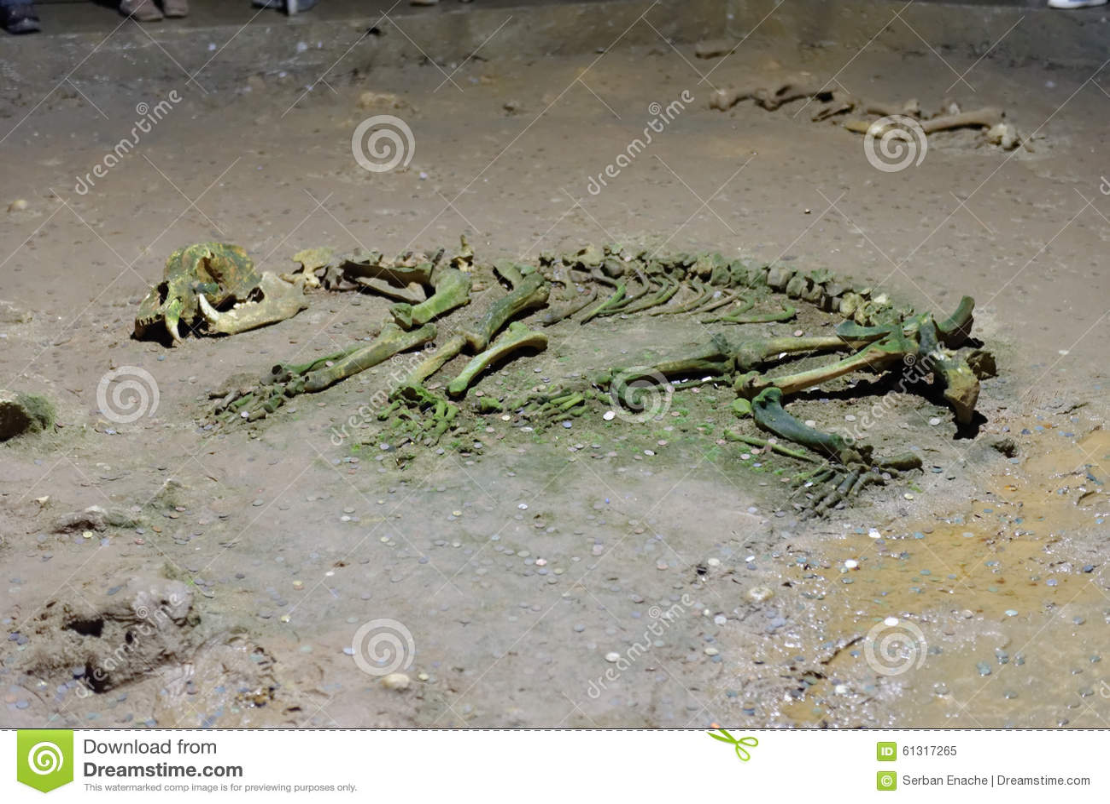 Dierlijk skelet in hol
