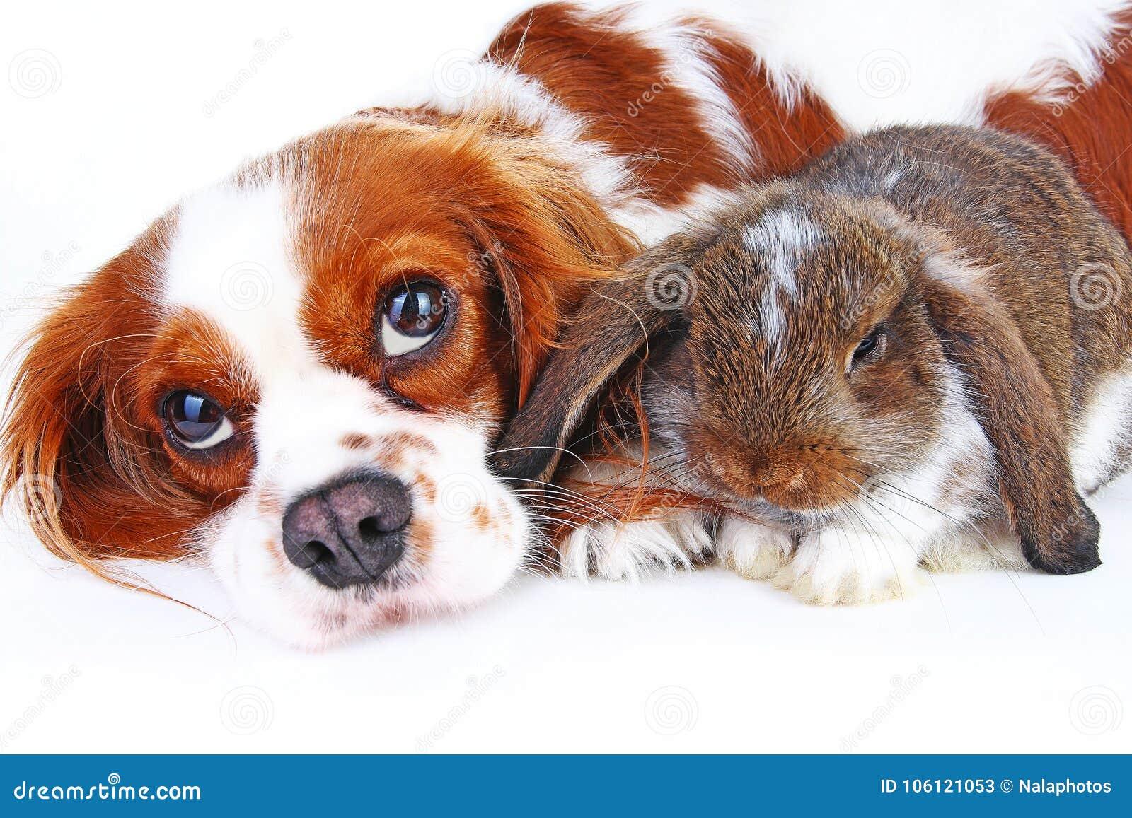 Dierlijke Vrienden Ware huisdierenvrienden Het konijntje van het hondkonijn snoeit samen dieren op geïsoleerde witte studioachter