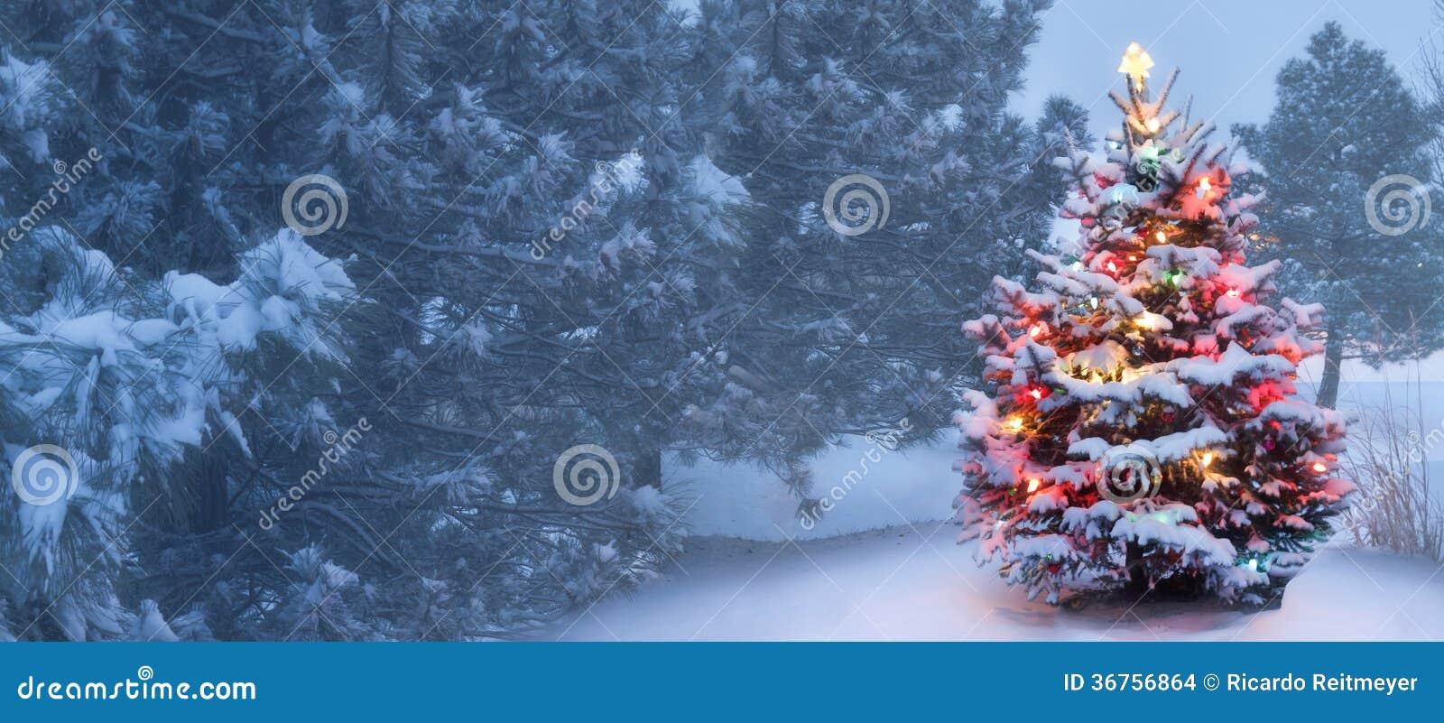 Dieser Baum glüht hell auf Schnee umfassten nebeligen Weihnachtsmorgen