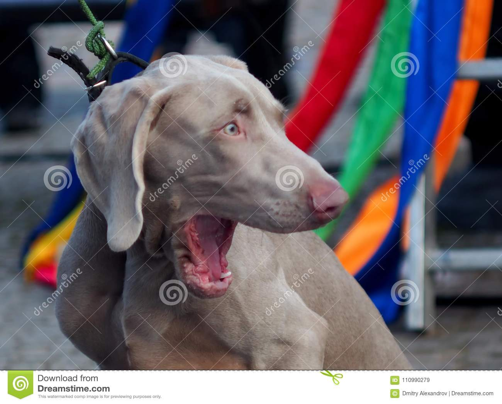 Dieser Hund ist sehr sehr oder anscheinend im Terror überrascht