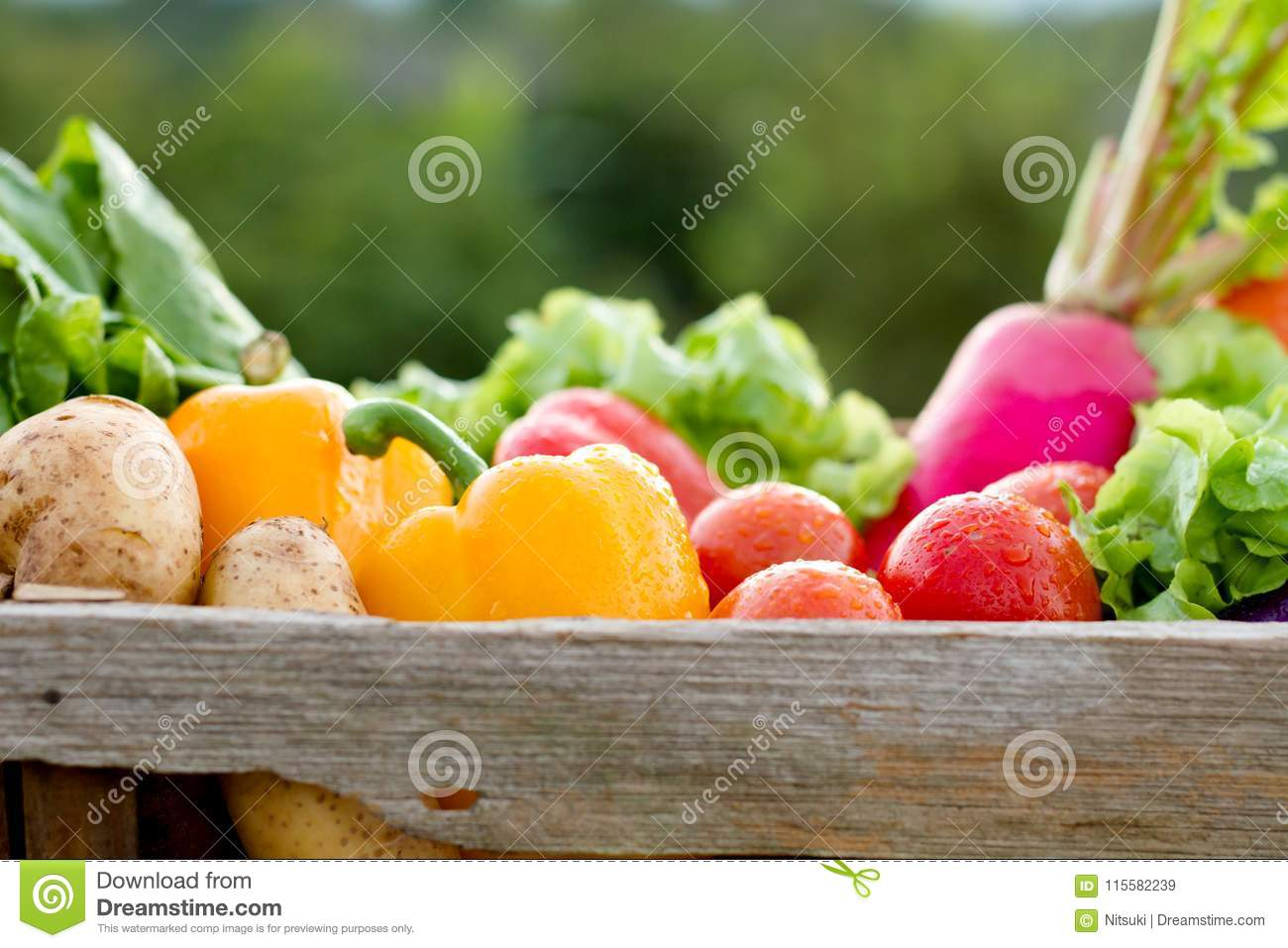 Nutrition Diet Healthy Life Nutritional Eating - Stock Photo [25071032]  - PIXTA