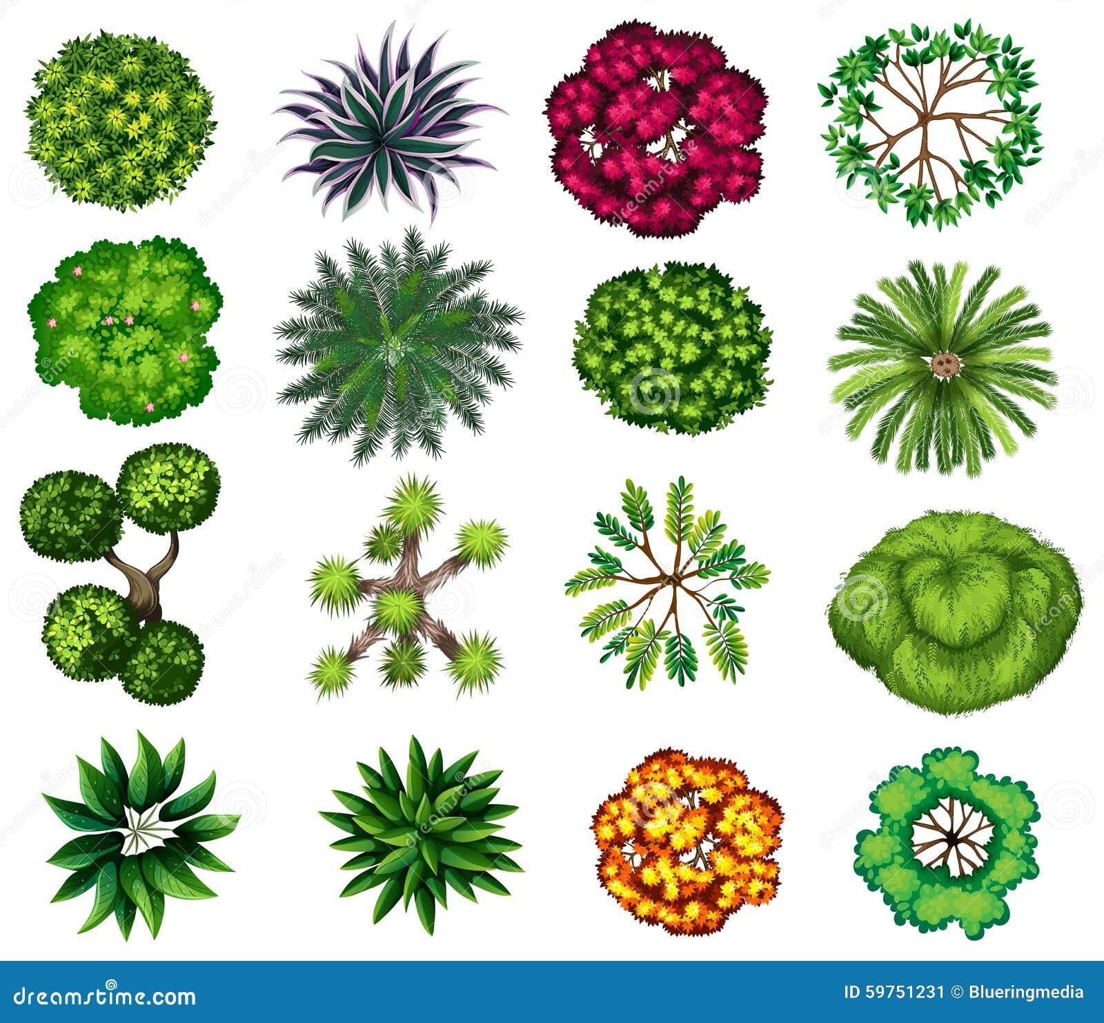 Diferente tipo de ejemplo de las plantas