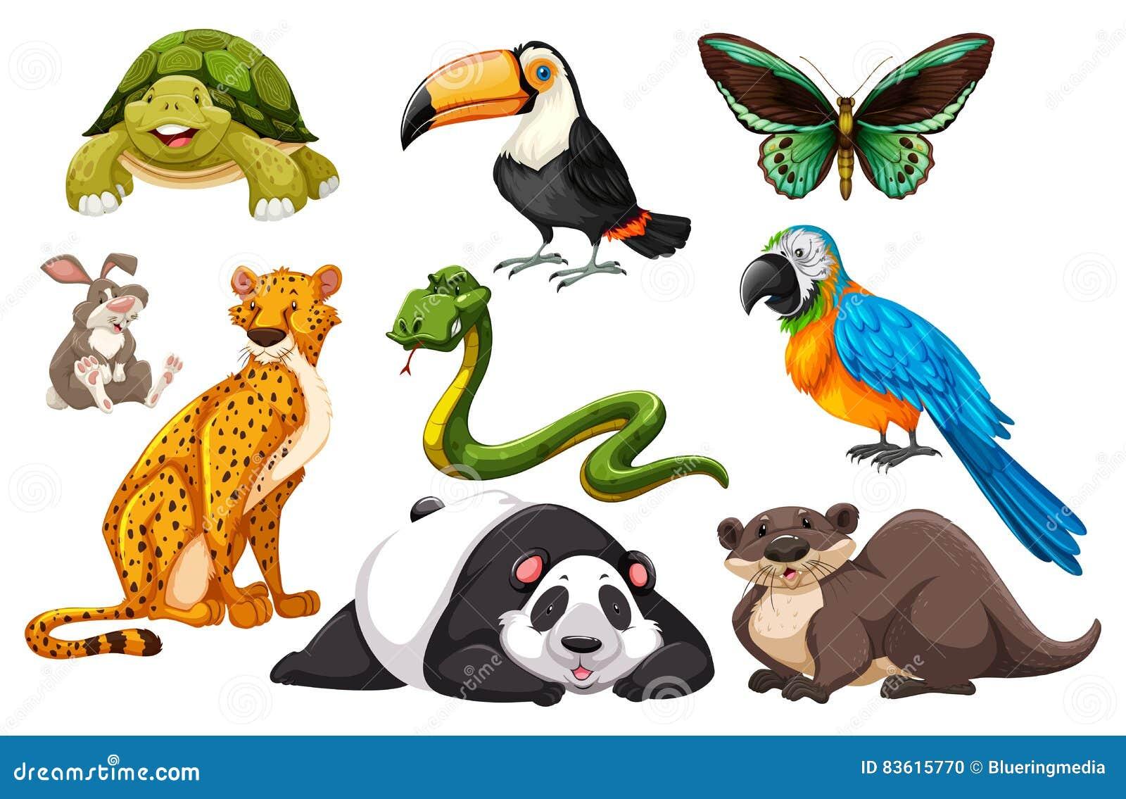 Diferentes Tipos De Animales Salvajes Ilustraci 243 N Del