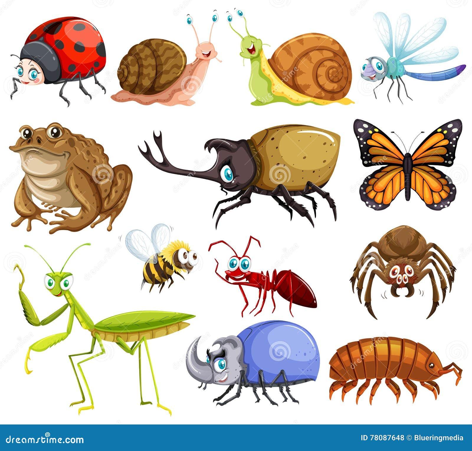 Diferentes tipos de insectos ilustraci n del vector for Diferentes tipos de viveros