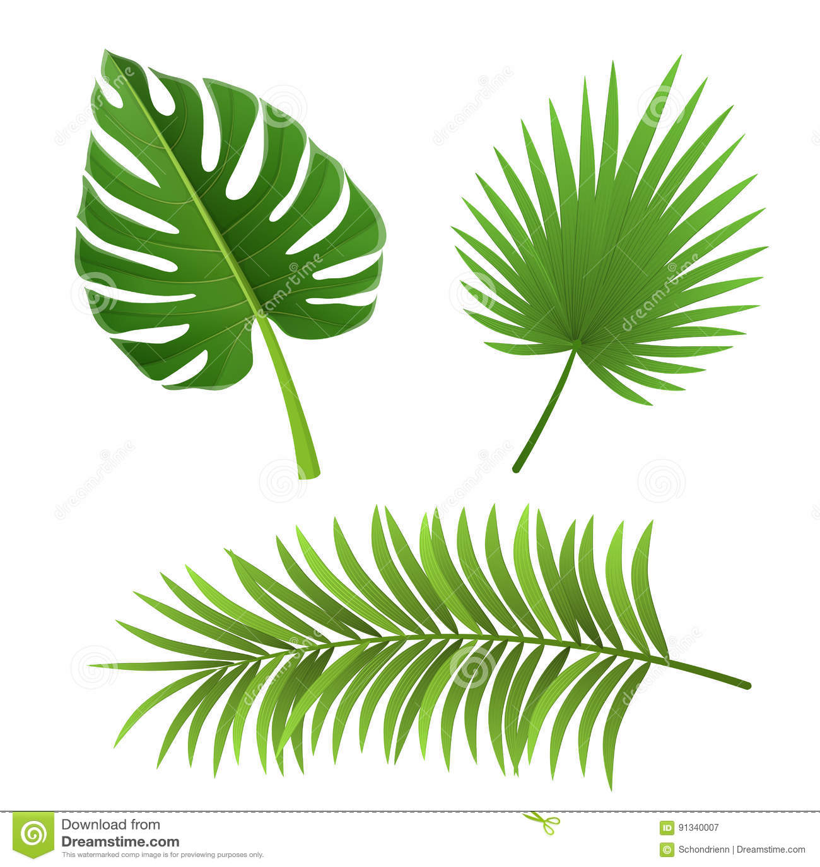 Différentes espèces de feuilles de palmier d isolement sur le blanc