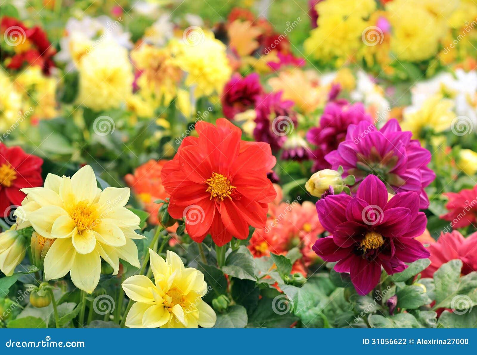 differentes fleurs