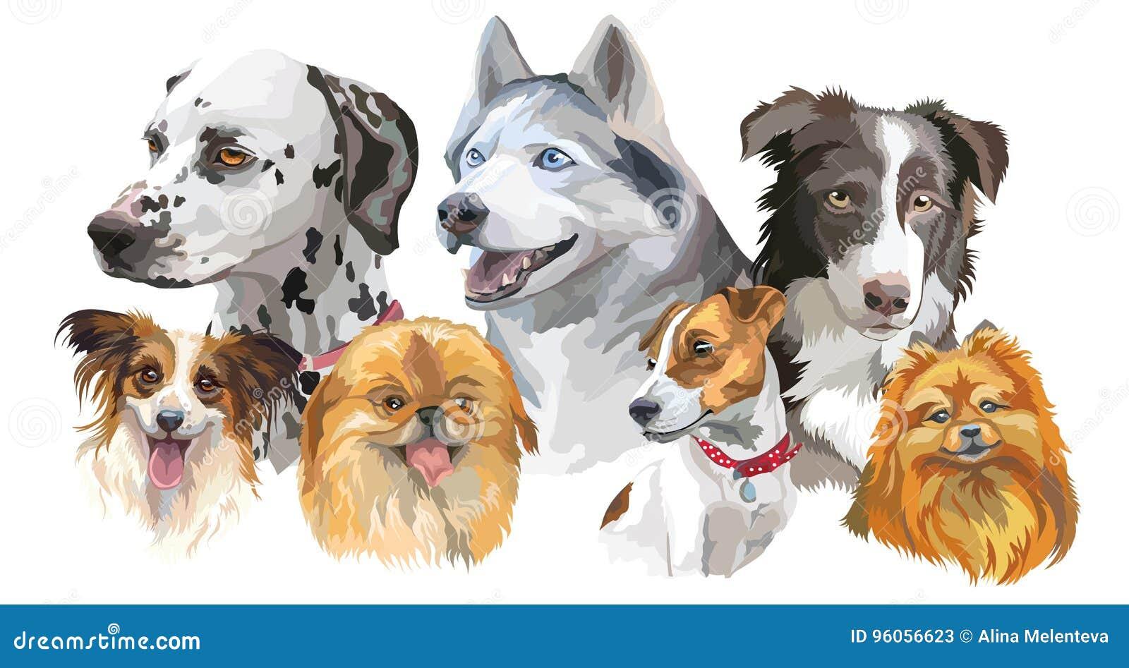 Différentes races de chien réglées