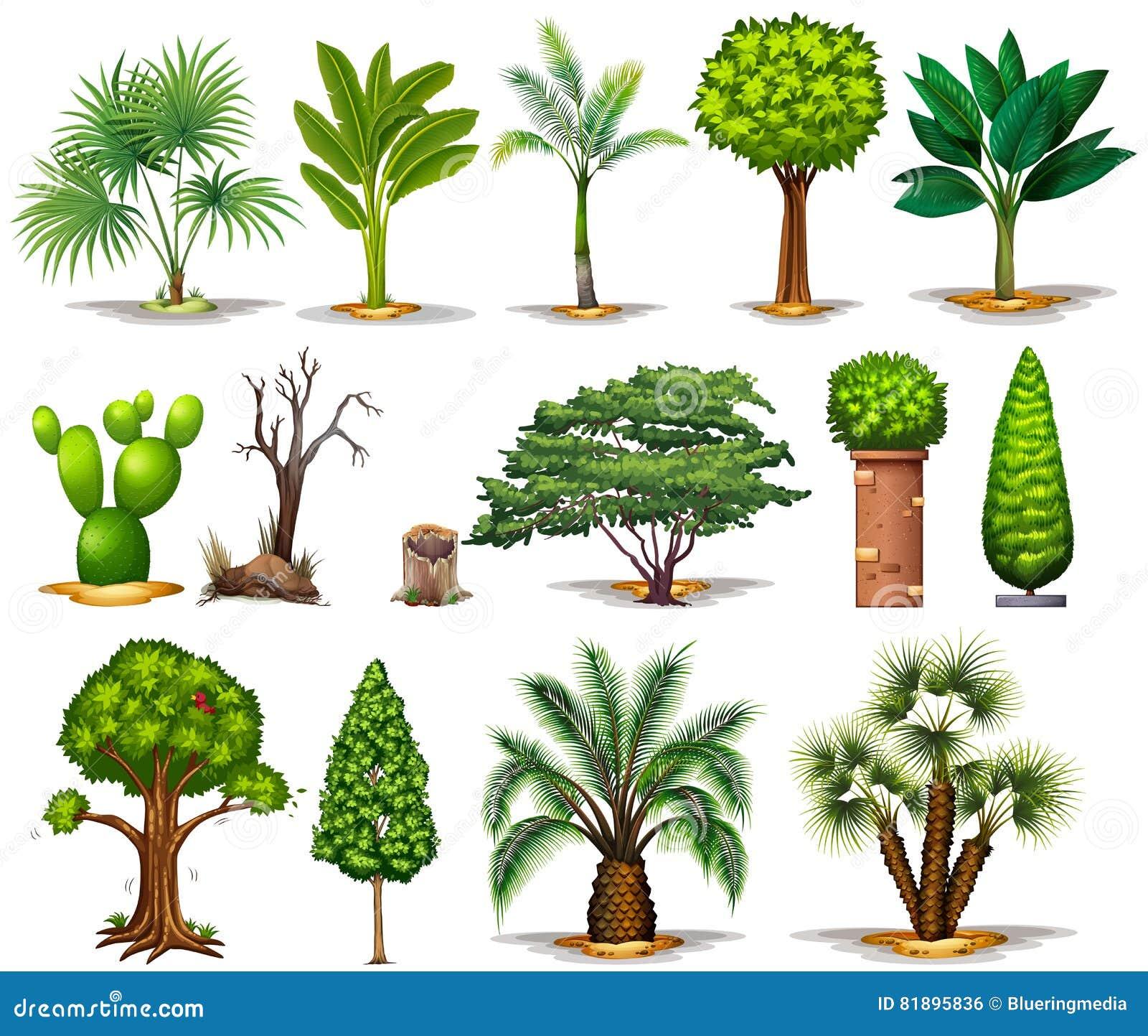 Diff rents types d 39 arbres illustration de vecteur image for Arboles con sus nombres y caracteristicas
