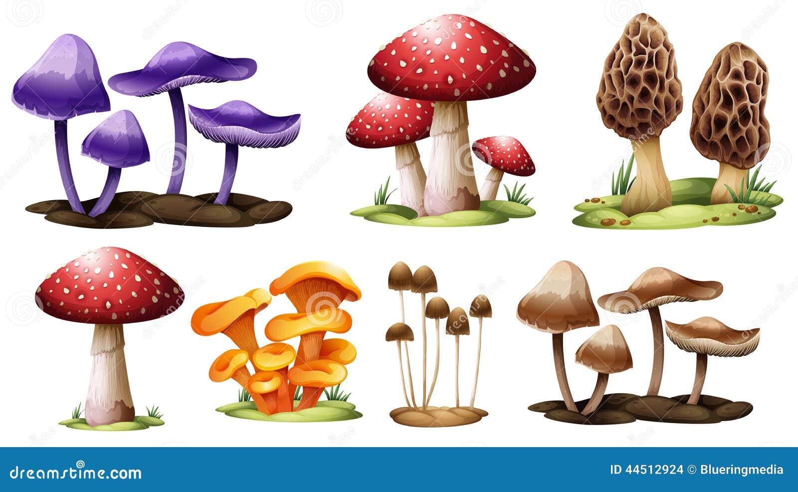 Diff rents types de champignons illustration de vecteur image 44512924 - Differents types de ventilation ...