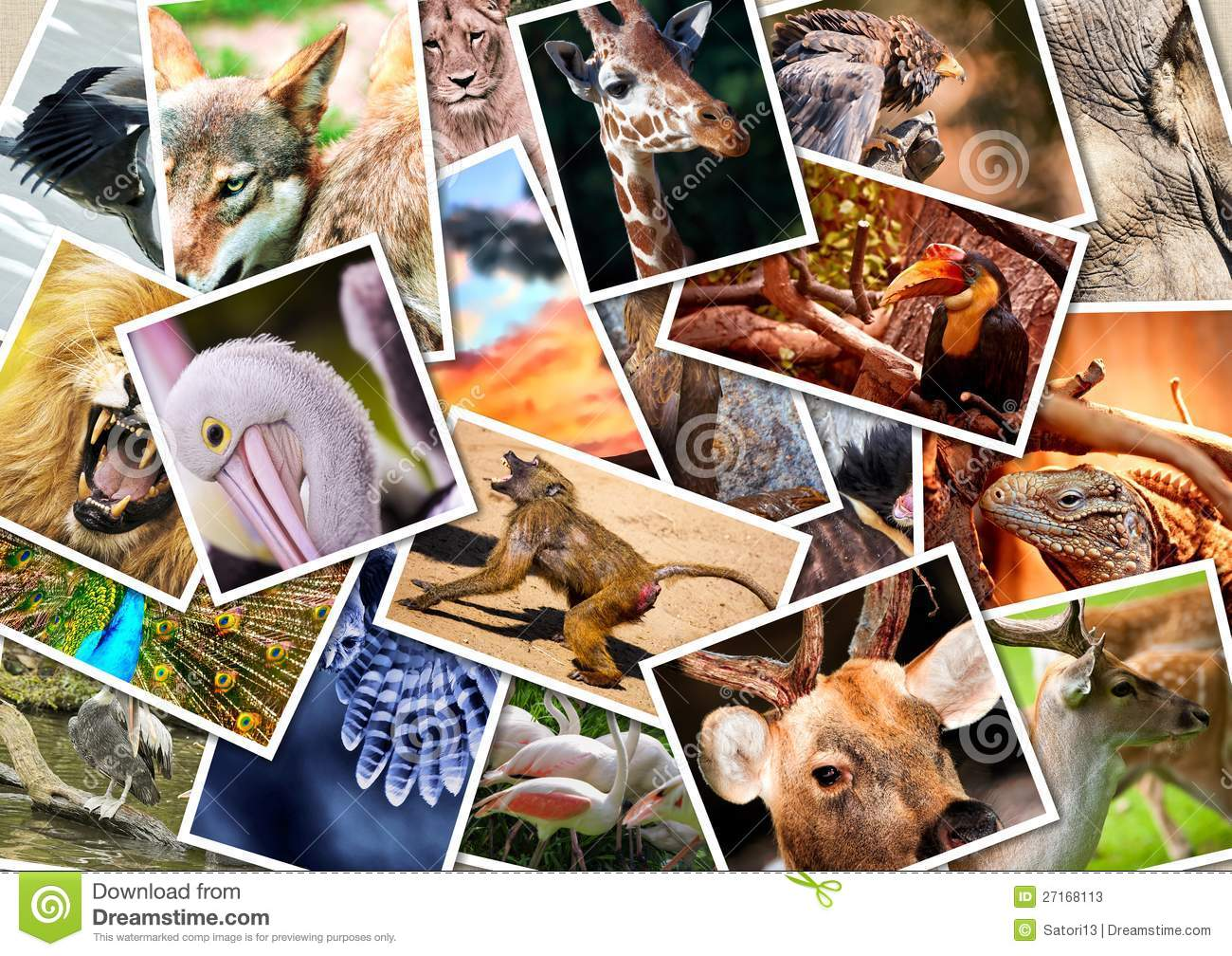 Different Animals Collage On Postcards Stock Photos