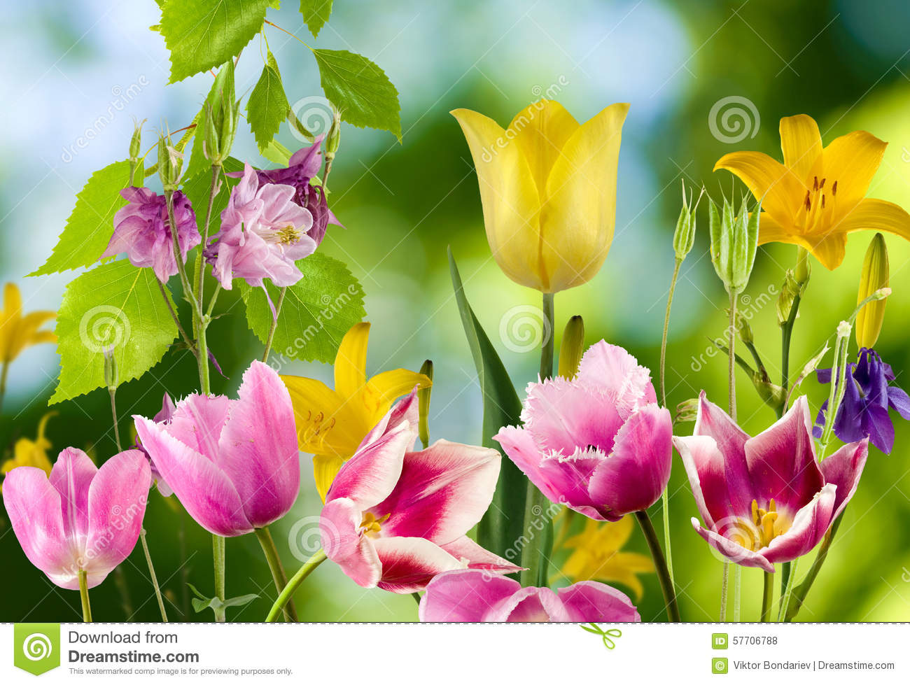 Different beautiful flowers in the garden closeup stock photo download comp izmirmasajfo