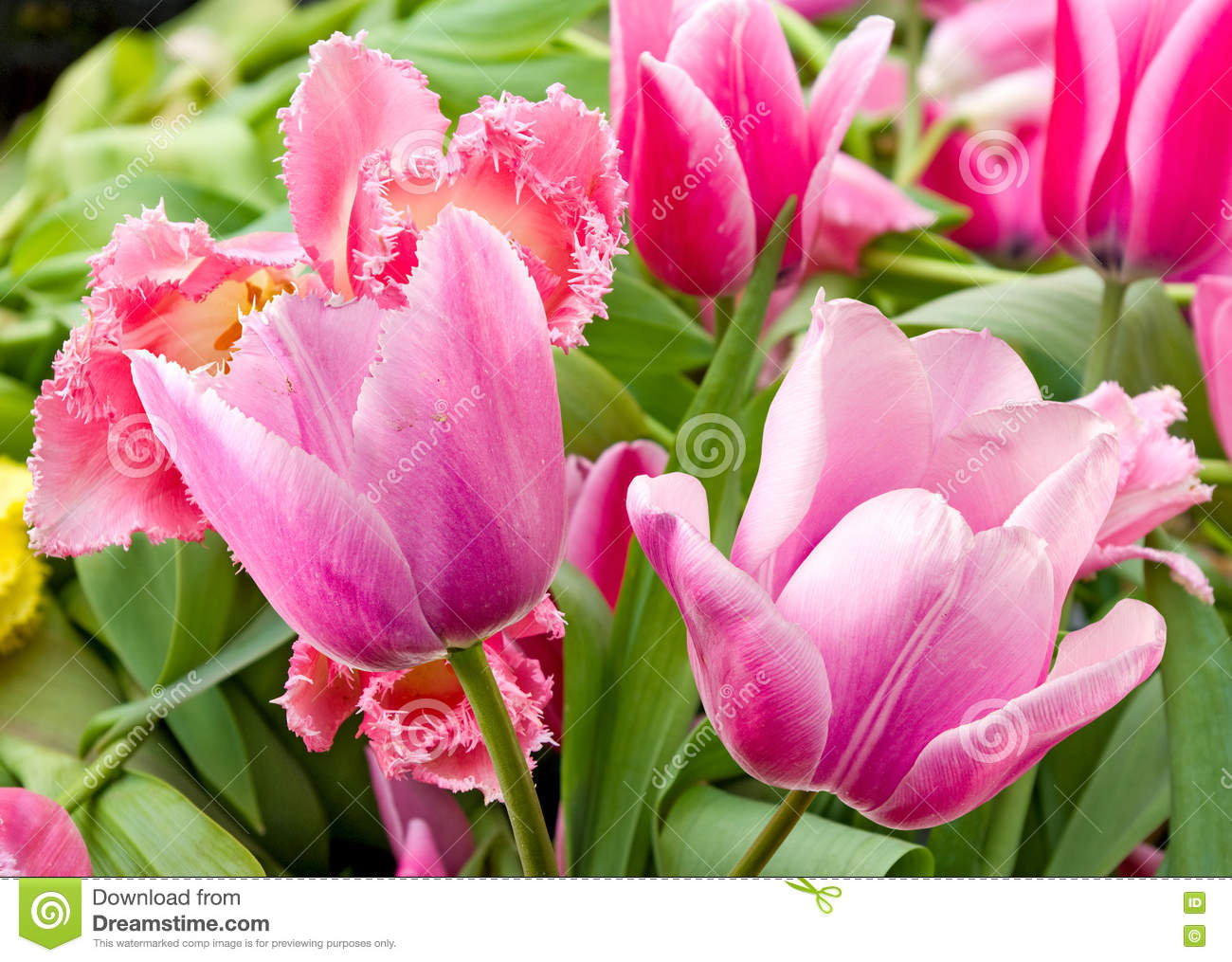 Different beautiful flowers in park closeup stock image image of different beautiful flowers in park closeup frame ecosystem royalty free stock photo download different beautiful flowers izmirmasajfo