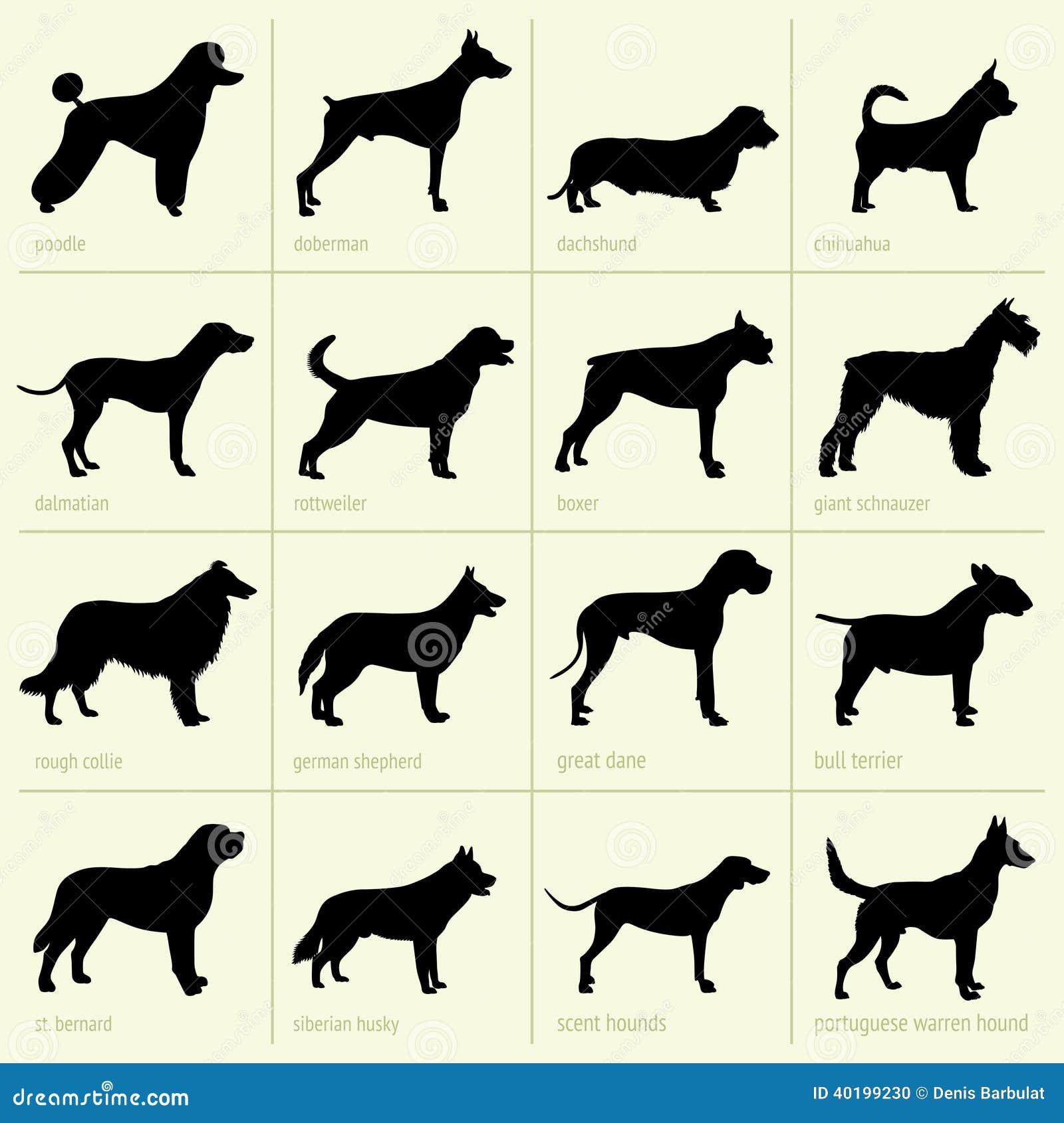 Different Breeds Of Dog Stock Illustration Image 40199230