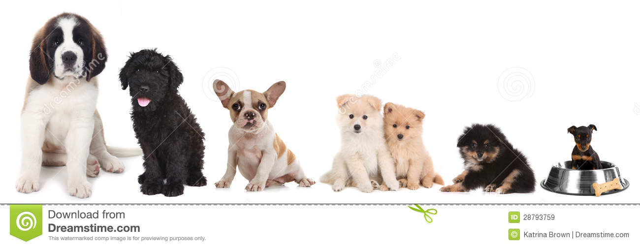 Different breeds of puppy dogs on white royalty free stock for Dog door size by breed
