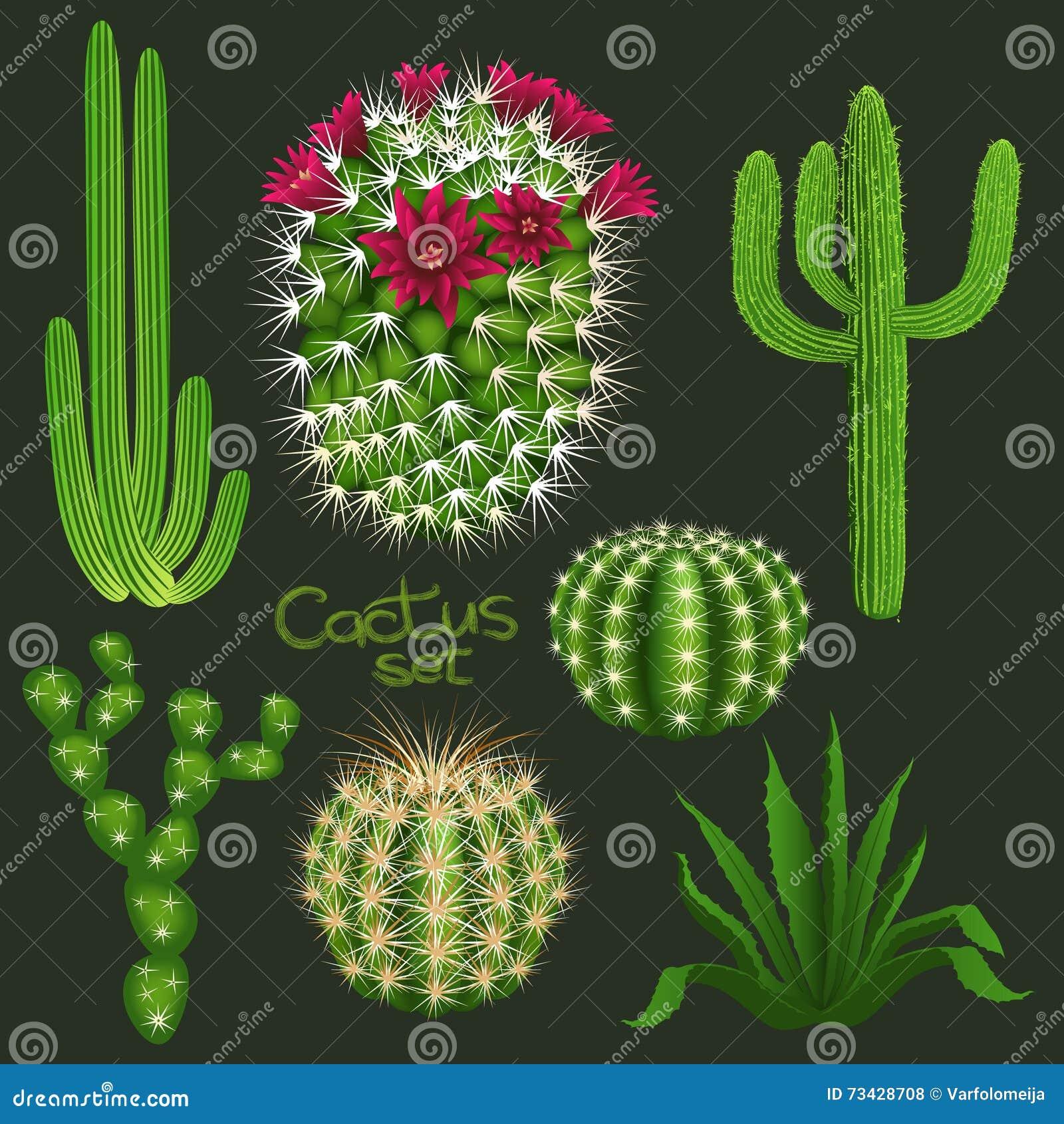 Cactus Realistic Seamless Vector Pattern On Dark
