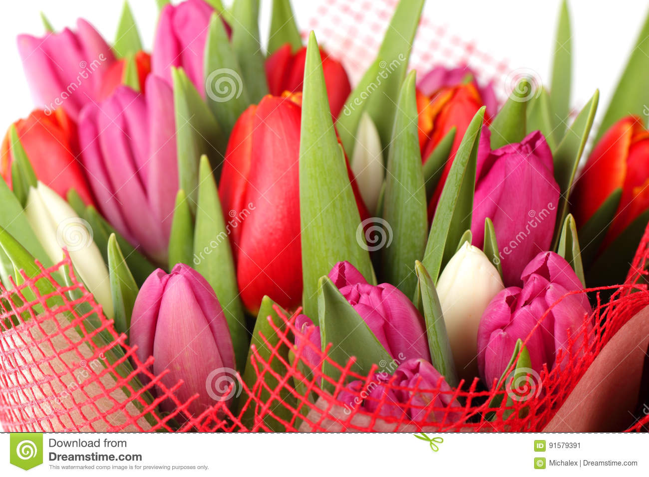 Different Color Tulip Flowers Stock Image - Image of flower ...