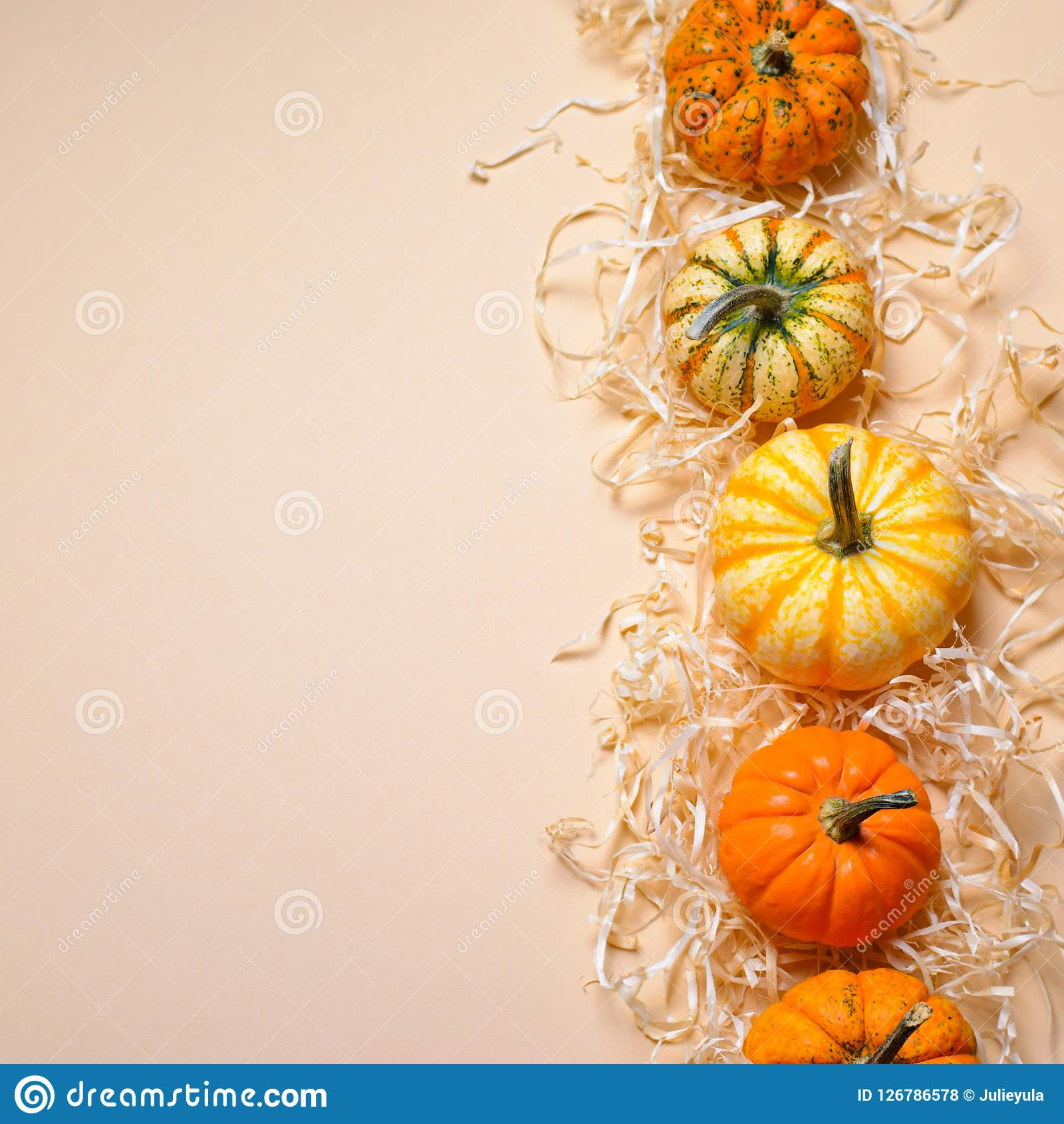 Different Colorful Pumpkins, Autumn Thanksgiving and Halloween Background. Different Colorful Pumpkins on Straw, Autumn Thanksgiving and Halloween Background Royalty Free Stock Photos