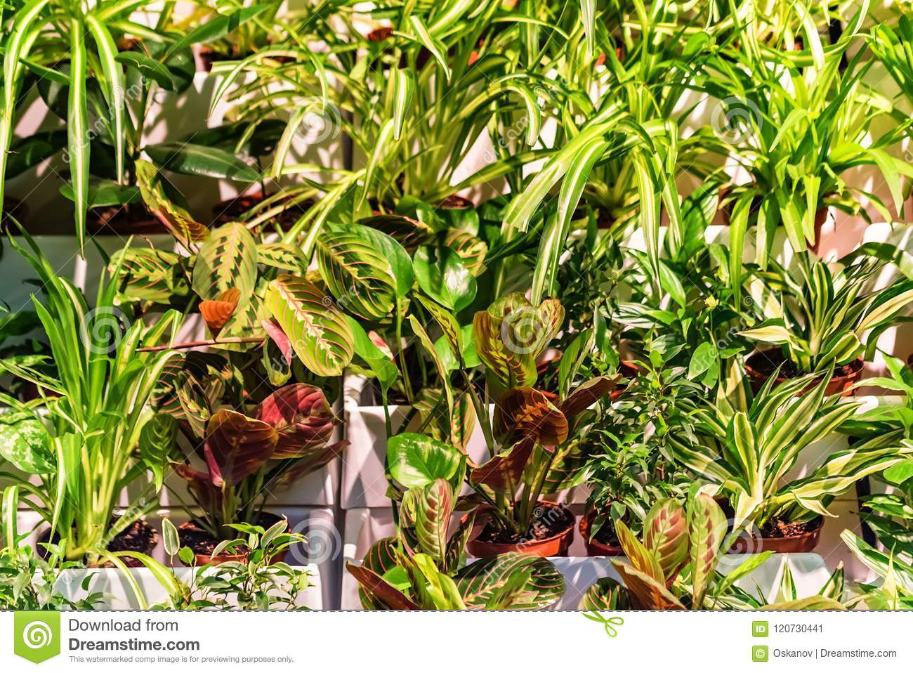 Different Decorative Potted Plants Outdoors Stock Image Image Of