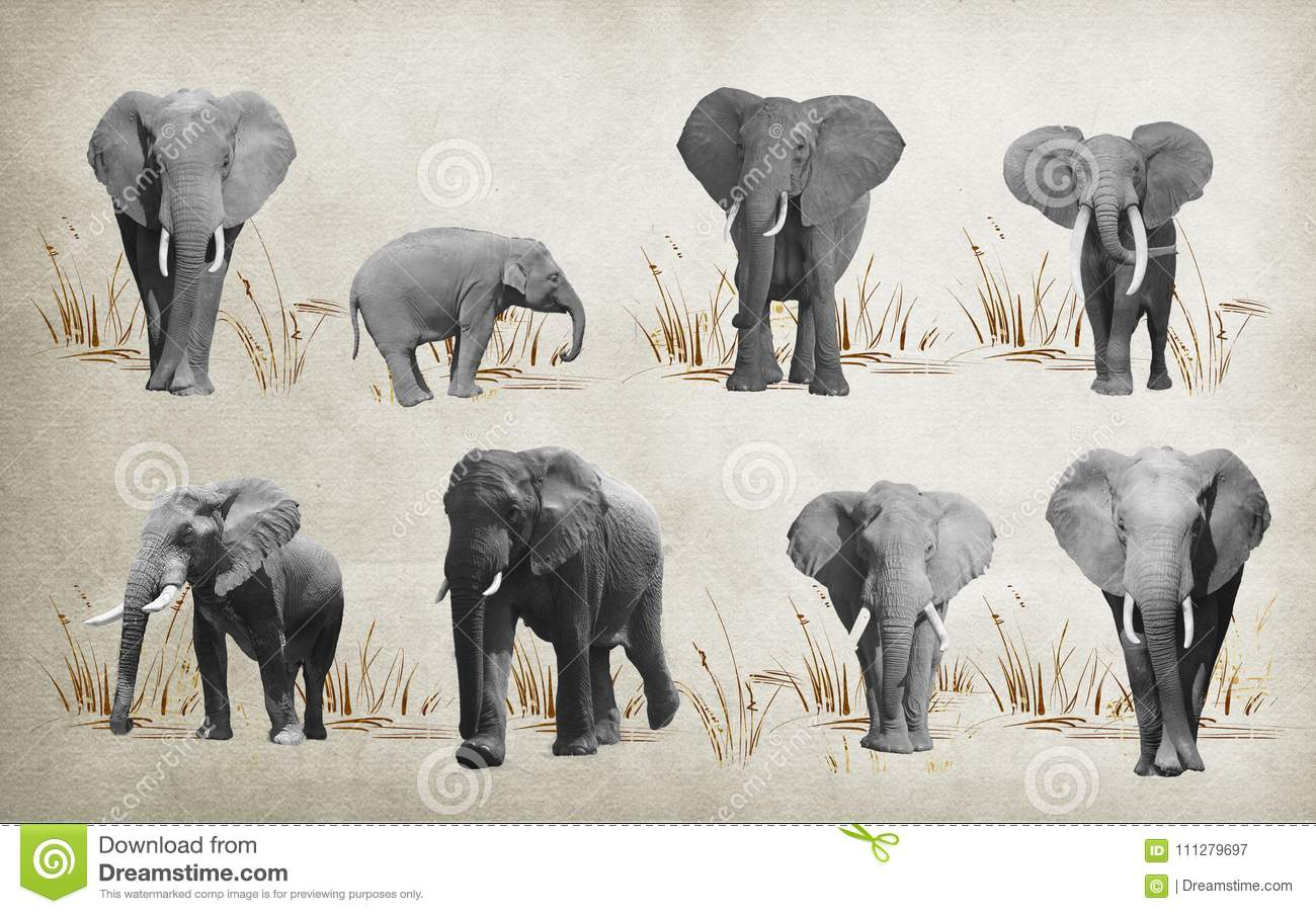 Different Elephants For Wallpaper On Background 3D Rendering