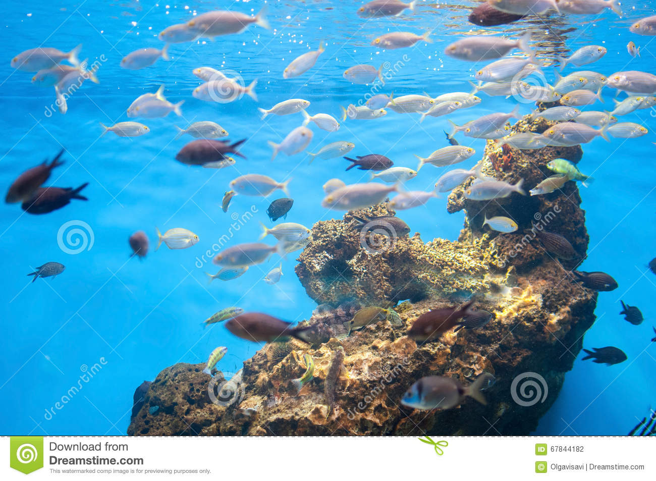 Different fish swim in an aquarium stock photo image for Clear water fish tank