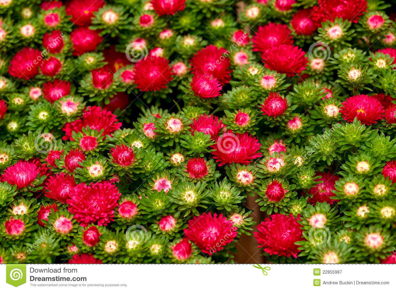Different Flowers Royalty Free Stock Photography Image 22855987
