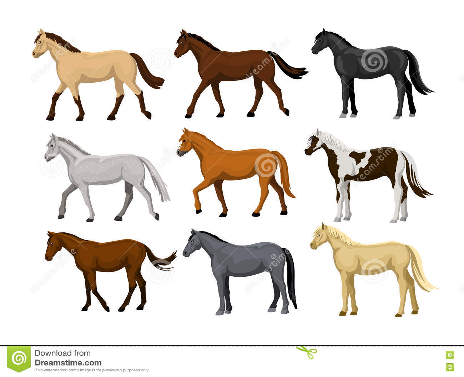 Different Horses Set In Typical Coat Colors Black Chestnut Dapple Grey Dun Bay Cream Buckskin Palomino Tobiano Paint Pa Stock Vector Illustration Of Head Dapple 78863868