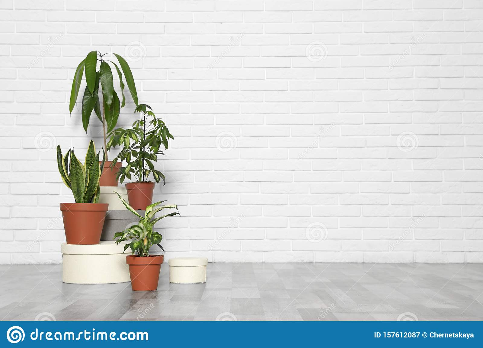 Different Indoor Plants At White Brick Wall Trendy Home Interior Decor Stock Image Image Of Fashion Decorative 157612087