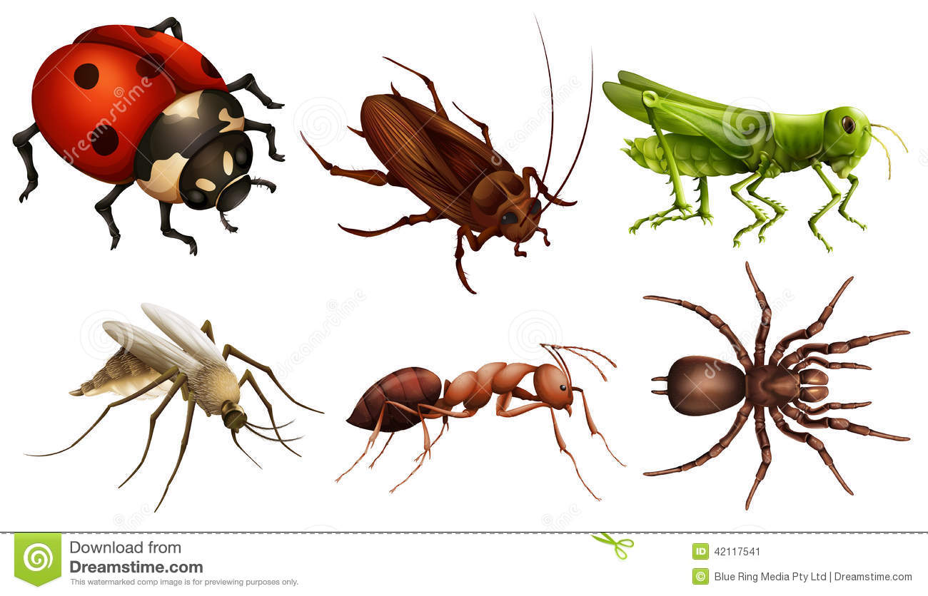 Illustration of the different insects on a white background.