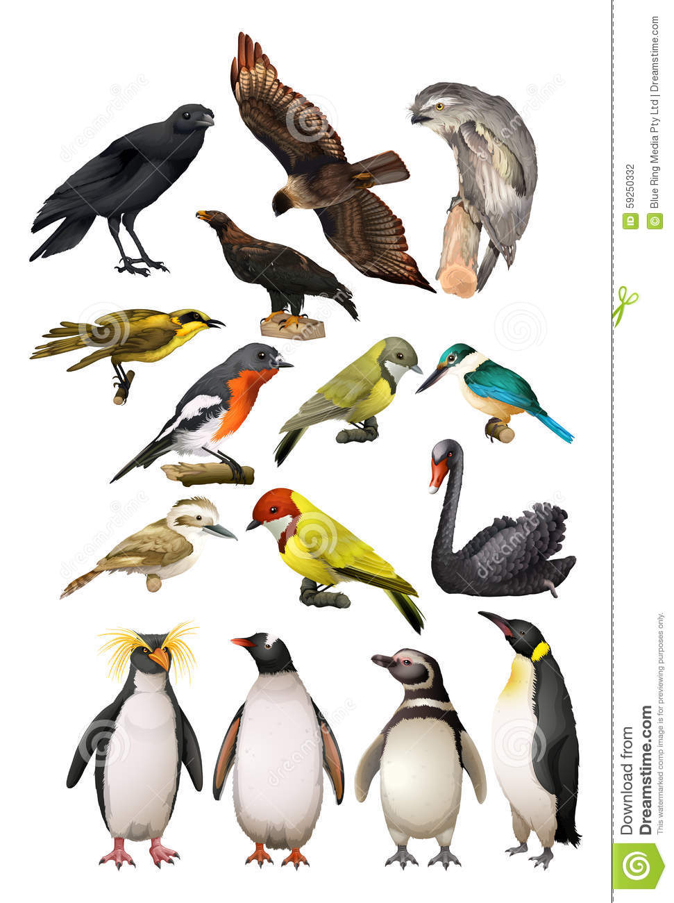 Different Kind Of Birds Stock Vector Image Of Penguin