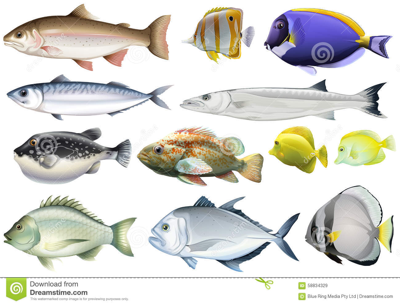 Image gallery different fish for Types of fish
