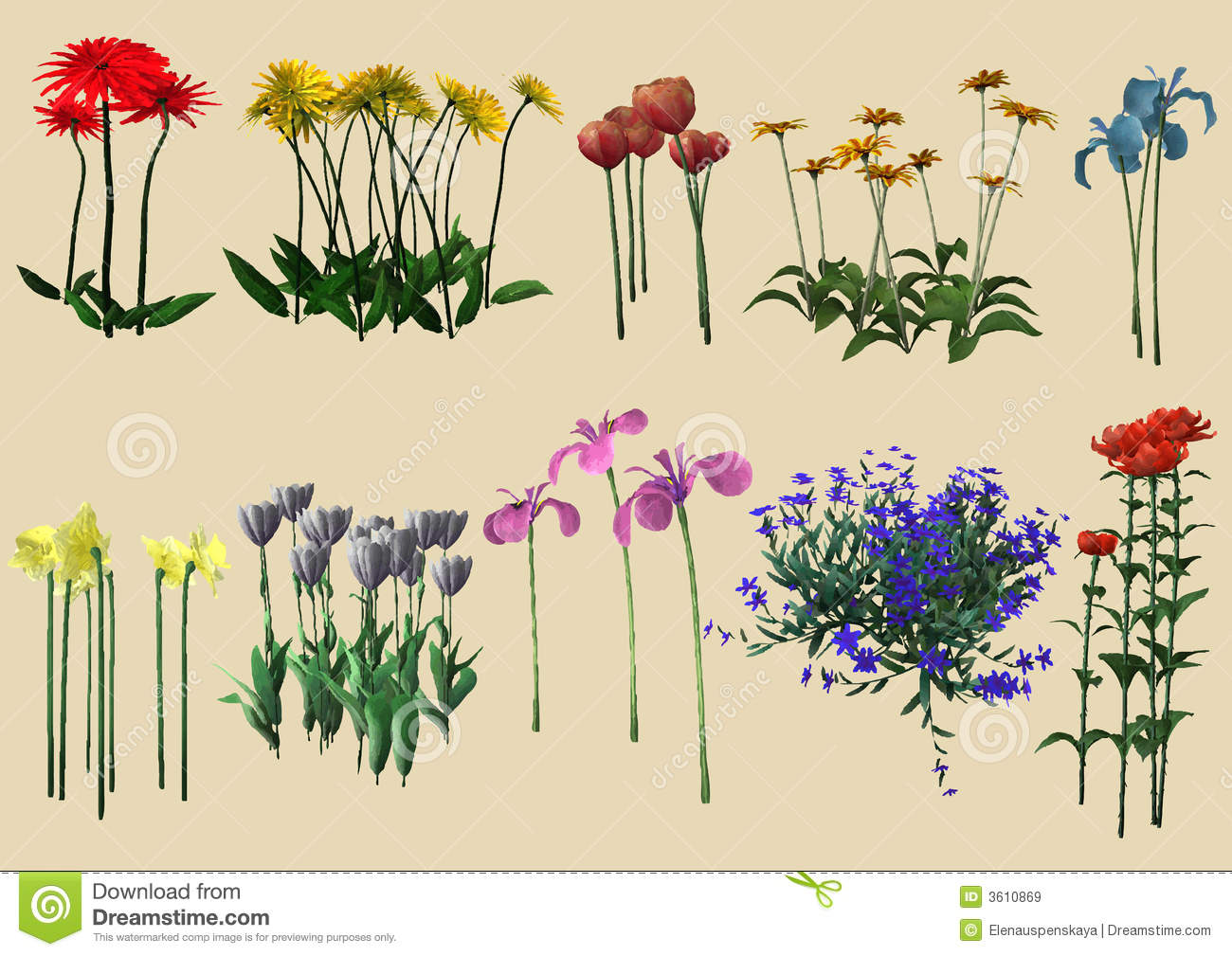 Different Kinds Flowers Royalty Free Stock Image
